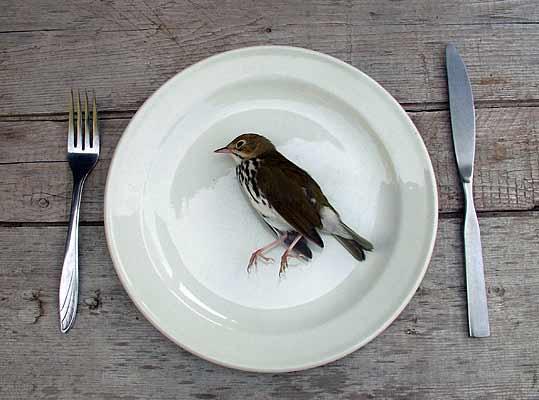 [Изображение: dead_bird.jpg]